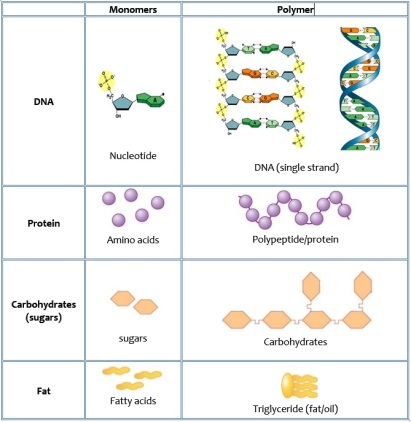 monomer-polymers