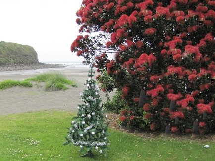 xmas tree and pohutukawa